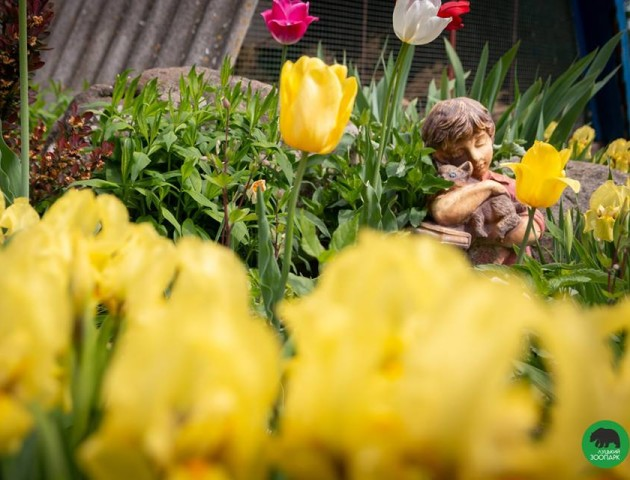 У Луцькому зоопарку зацвіли тюльпани. ФОТО