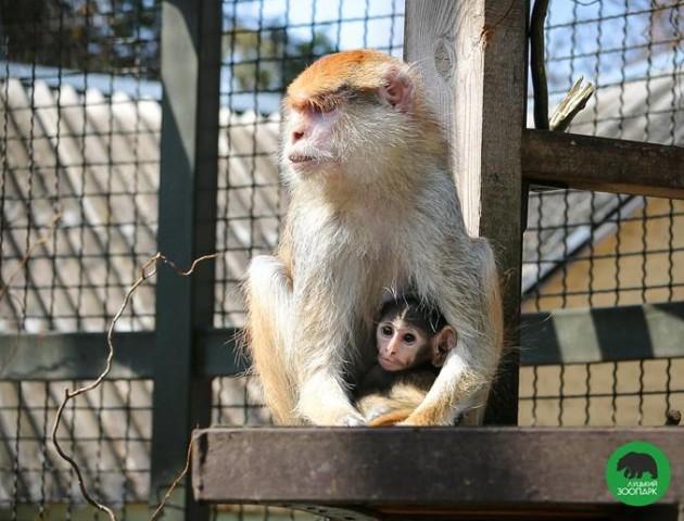 Неймовірні світлини з Луцького зоопарку: мами-звірята та їхні малята. ФОТО