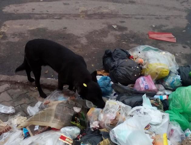Купа сміття в центрі Ковеля. ФОТО