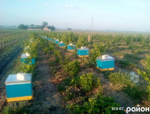 Екобіда на Волині: через обробку полів хімікатами загинули тисячі бджіл