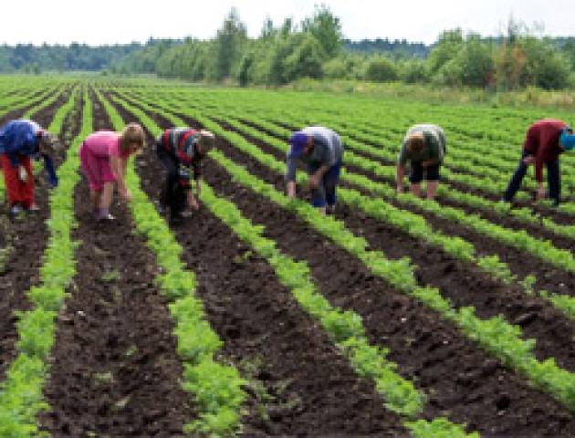 Мінагрополітики створить фонд гарантування для фермерів
