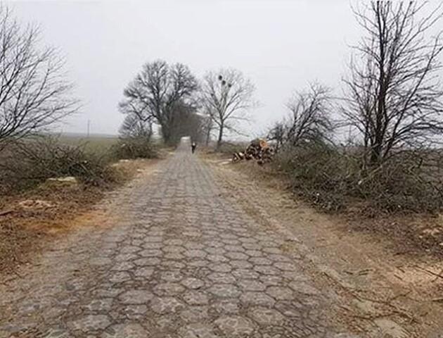 На Волині вирізали ясени і тополі вздовж дороги, яку проклали Радзивілли