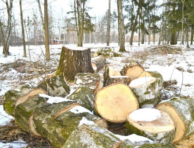 Центральний парк у Луцьку перетворили на суцільний лісоповал. ФОТО