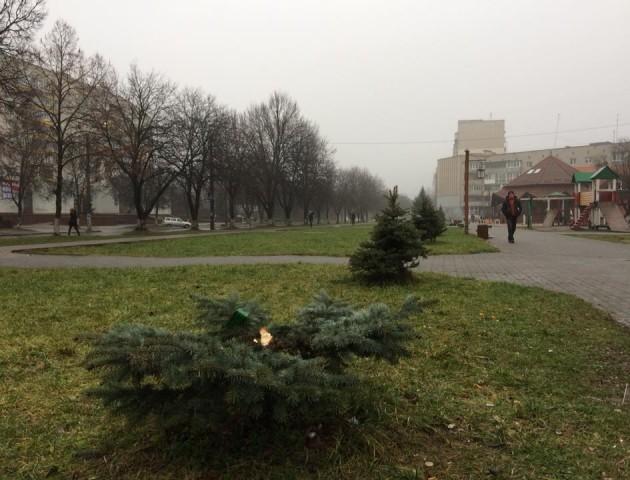 У Луцьку посеред вулиці зрубали і вкрали ялинку. ФОТО