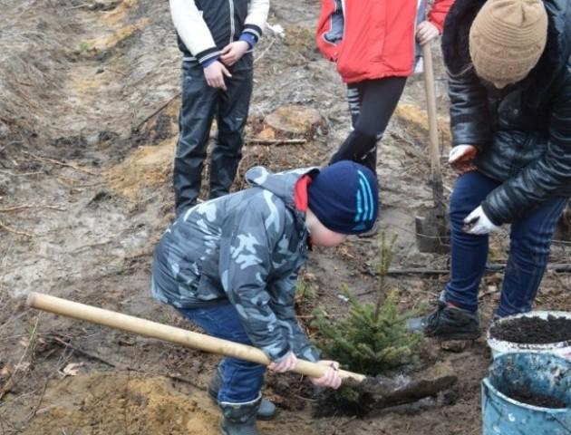 На Волині діти допомогли лісівникам посадити майже гектар лісу. ФОТО