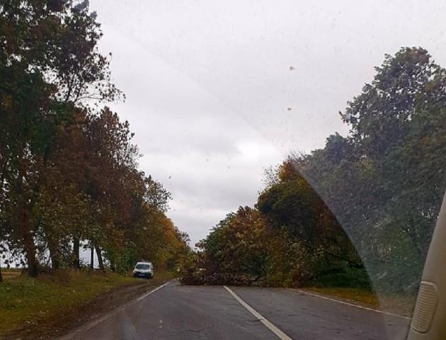Стихія на Волині: від сильного вітру дерева падають на дороги