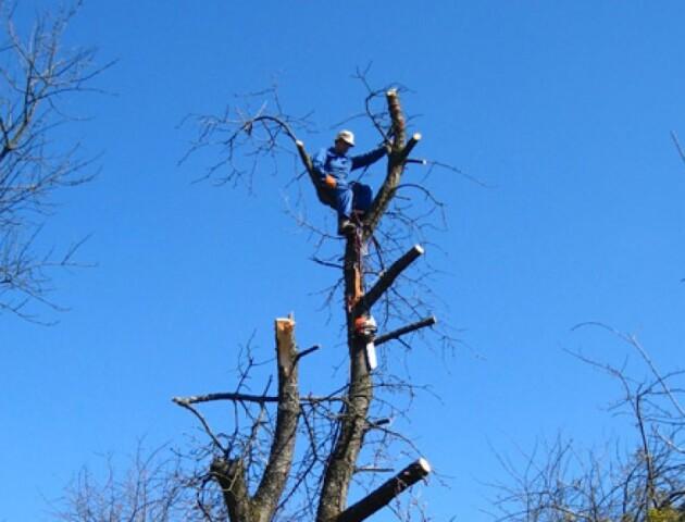 Луцьких комунальників просять навчити кронувати дерева. Зареєстрували петицію