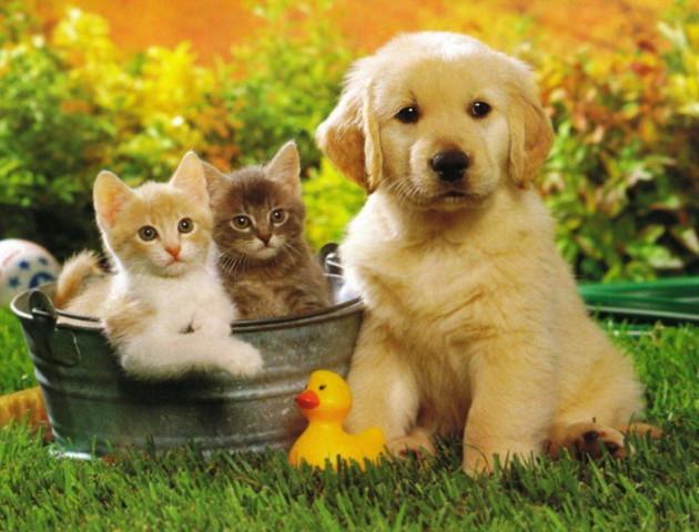 У Луцьку затвердили нові правила утримання домашніх тварин