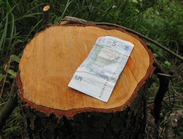 Скільки грошей за півроку спрямували до держбюджету волинські лісники