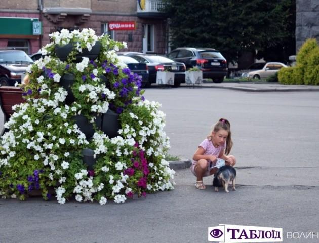 Квітучий Луцьк в останні дні літа. ФОТО