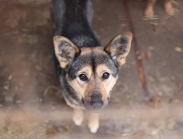 Лучан кличуть у «Ласку» будувати собакам будки