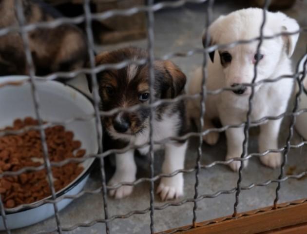 У Ковелі хочуть створити притулок для бездомних тварин
