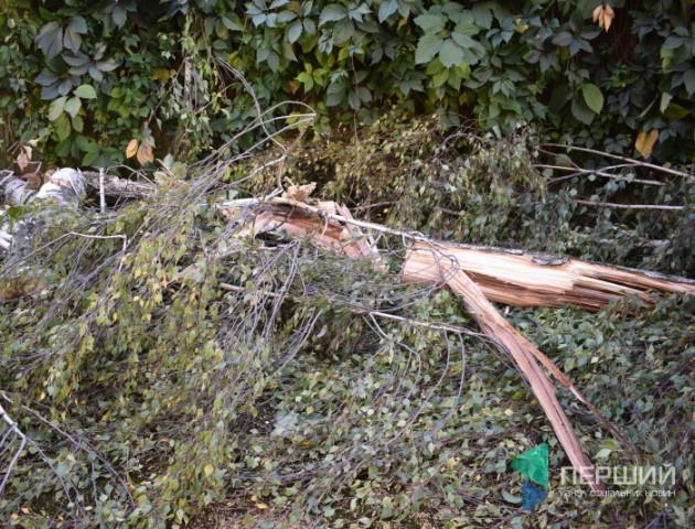 Вирубка на 370 тисяч: розповіли, де у Луцьку поменшає дерев