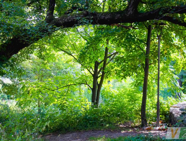 Нетрі і гори сміття: луцький ботанічний сад. ФОТО