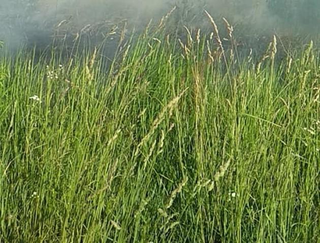 У селі на Волині горить суха трава, вогонь «йде» до лісу