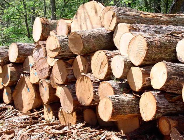 На Волині лісопорушники нелегально доставляли деревину на приватні пилорами