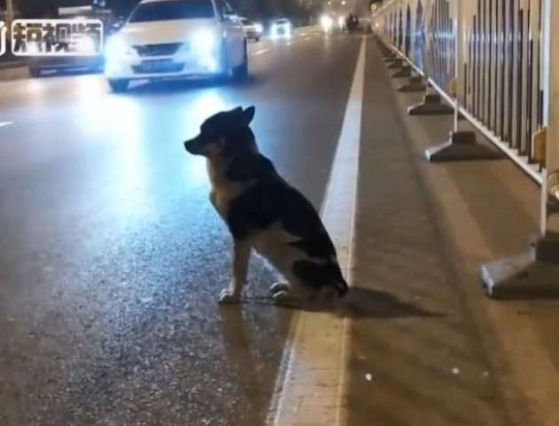 У Китаї собака три місяці чекає на загиблу хазяйку. ВІДЕО