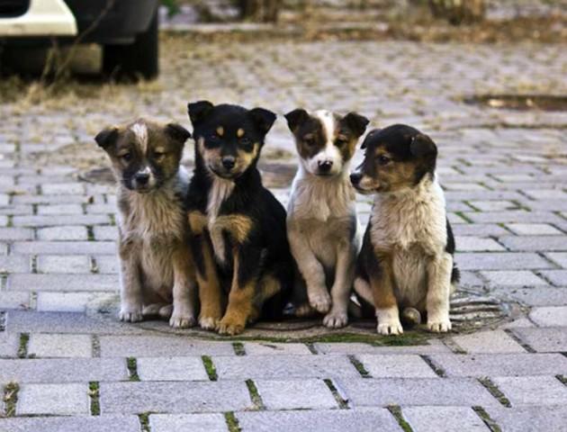 У Луцьку підрахували безпритульних собак. АНАЛІТИКА