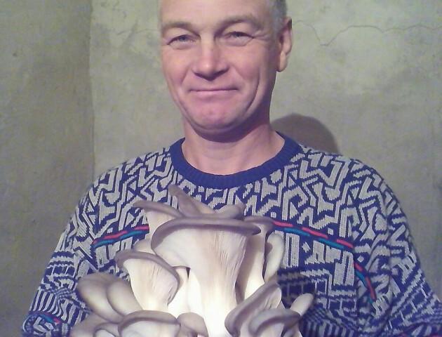 Волинянин виростив врожай грибів удома