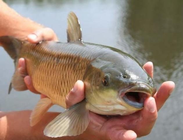 Спіймали волинянина, який ловив рибу «голими руками»
