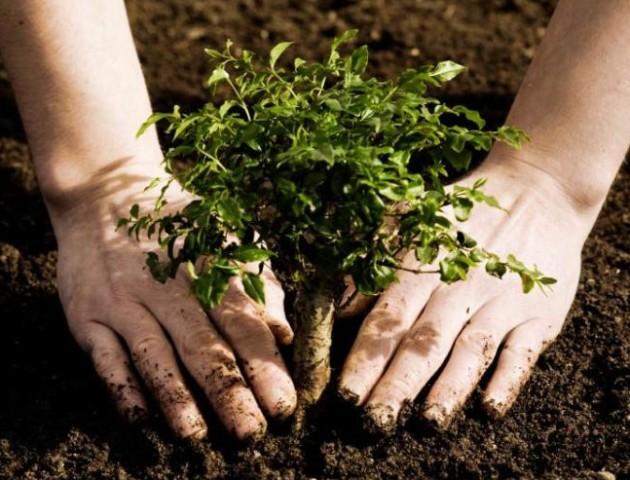 Луцьк планують озеленити на 50 мільйонів гривень. ВІДЕО