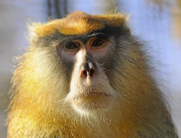 Запорука гарного настрою на довго: милі світлини мавпочок Луцького зоопарку. ФОТО