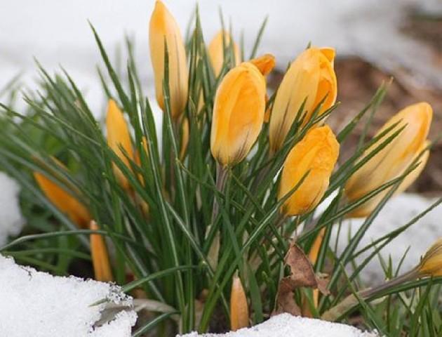 Якою буде погода у Луцьку 17 лютого