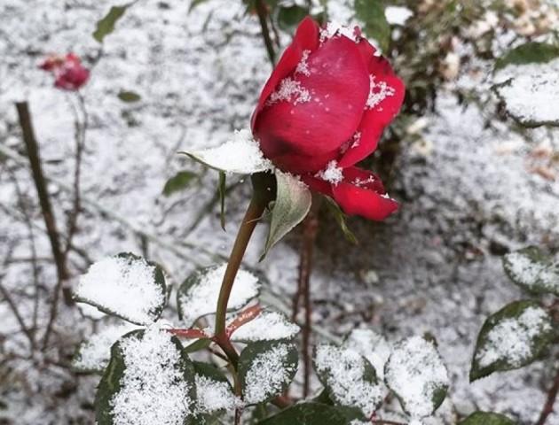 Перший сніг у Ковелі. ФОТО