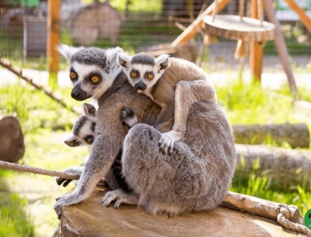 У Луцькому зоопарку 8 березня буде безкоштовний вхід для жінок