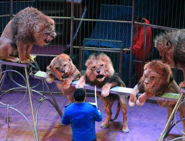 В Україні хочуть заборонити диких тварин у цирках