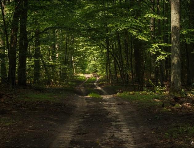 Магія волинського лісу в об'єктиві фотографа