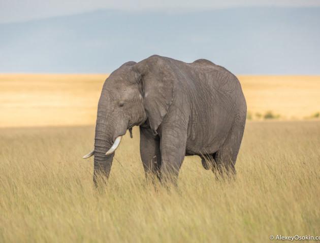 Мільйони переглядів: сліпий слон танцює під акомпанемент фортепіано. ВІДЕО