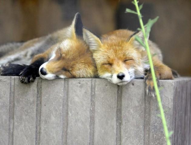 Чим годують тварин у Луцькому зоопарку. ВІДЕО