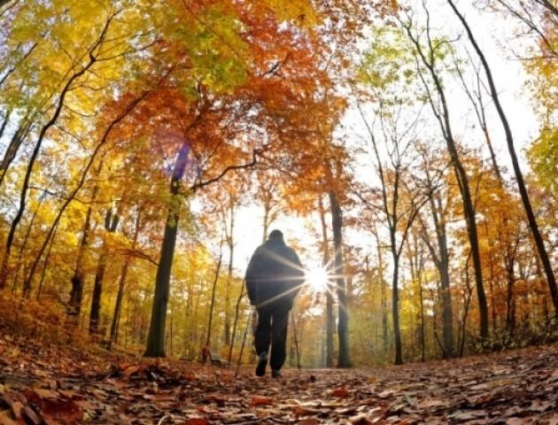 Якою буде погода в Луцьку 8 листопада