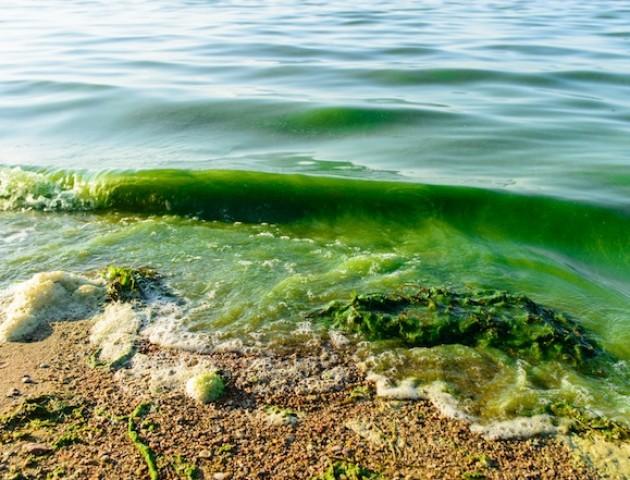 Через аномальну спеку балтійські пляжі атакують небезпечні водорості
