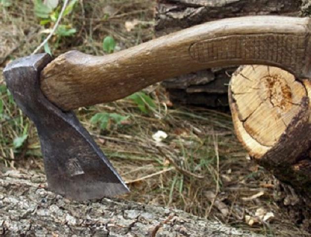 Волинянин отримав 2 роки в'язниці за крадіжку лісу на понад 150 тисяч гривень