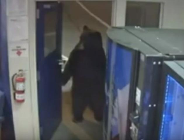 У Каліфорнії ведмідь зайшов у поліцейський відділок. ВІДЕО