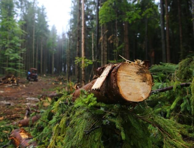 Лісівники «переманюють» волинян, щоб ті не їхали на заробітки у Польщу