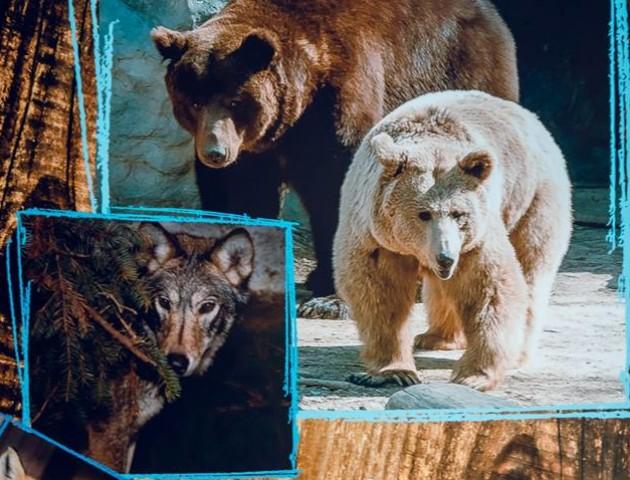 Жителі Луцького зоопарку стали героями календаря. ФОТО