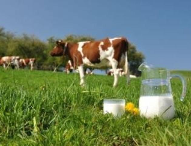 Аграрні кооперативи: чому фермерам вигідно дружити проти когось