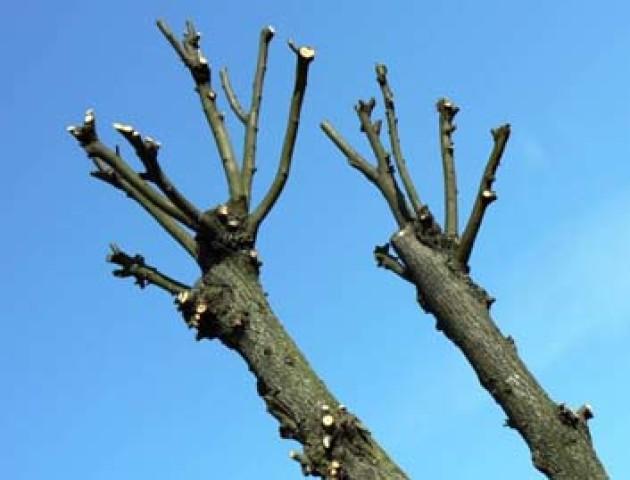 У Луцьку витратять майже півмільйона на зрізання дерев