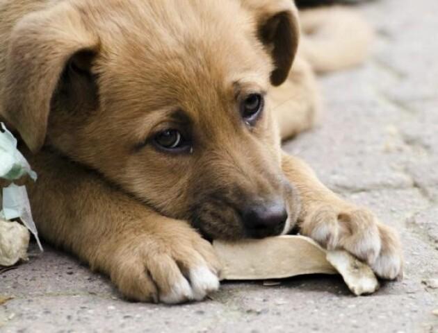 У Луцьку працівників КП «Ласка» навчатимуть представники міжнародної організації захисту тварин