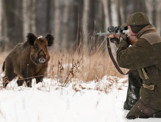 Від завтра на Волині стартує полювання на кабанів, козуль та оленів