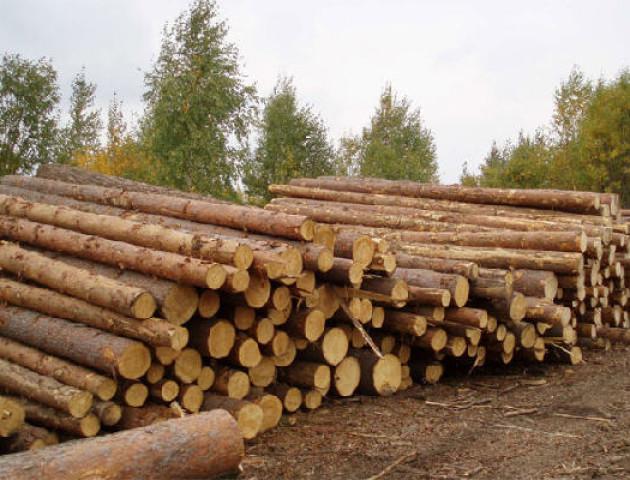 Парламентський комітет обговорив «лісові» питання у Львові. ФОТО