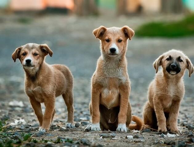 Активісти просять Луцькраду заборонити ввозити до міста безпритульних тварин