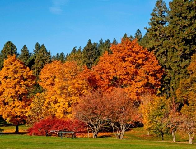 Якою буде погода в Луцьку 11 листопада