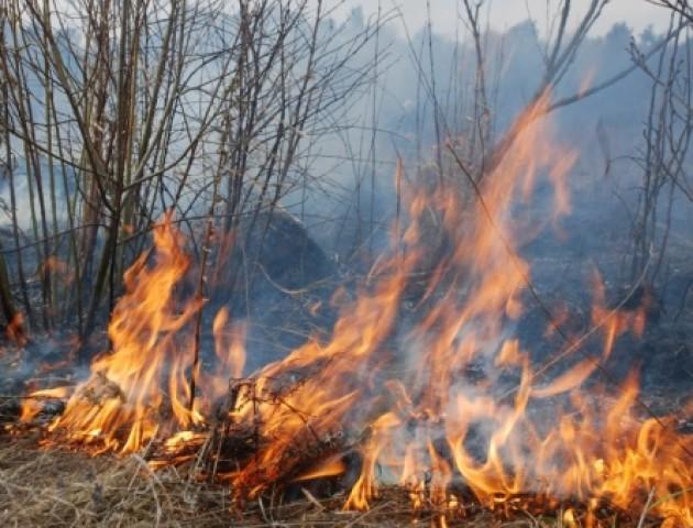 Муніципали закликають лучан не палити сухостій та листя