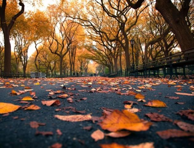 Якою буде погода у Луцьку та області 2 листопада