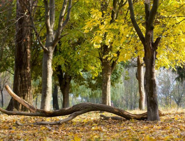 Яким може бути парк 900-річчя Луцька. ВІДЕО