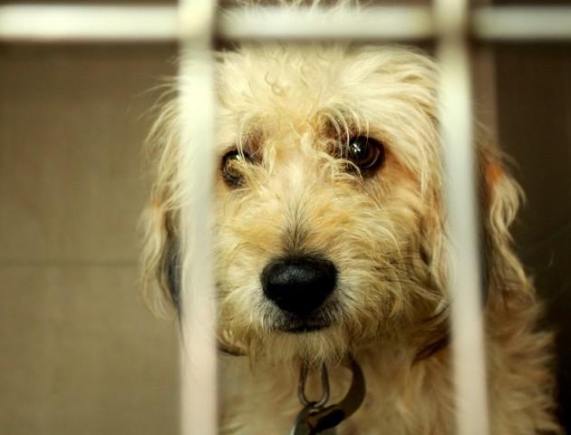 «Тварини все ще хворіють, страждають і помирають», - луцька журналістка про КП «Ласку»
